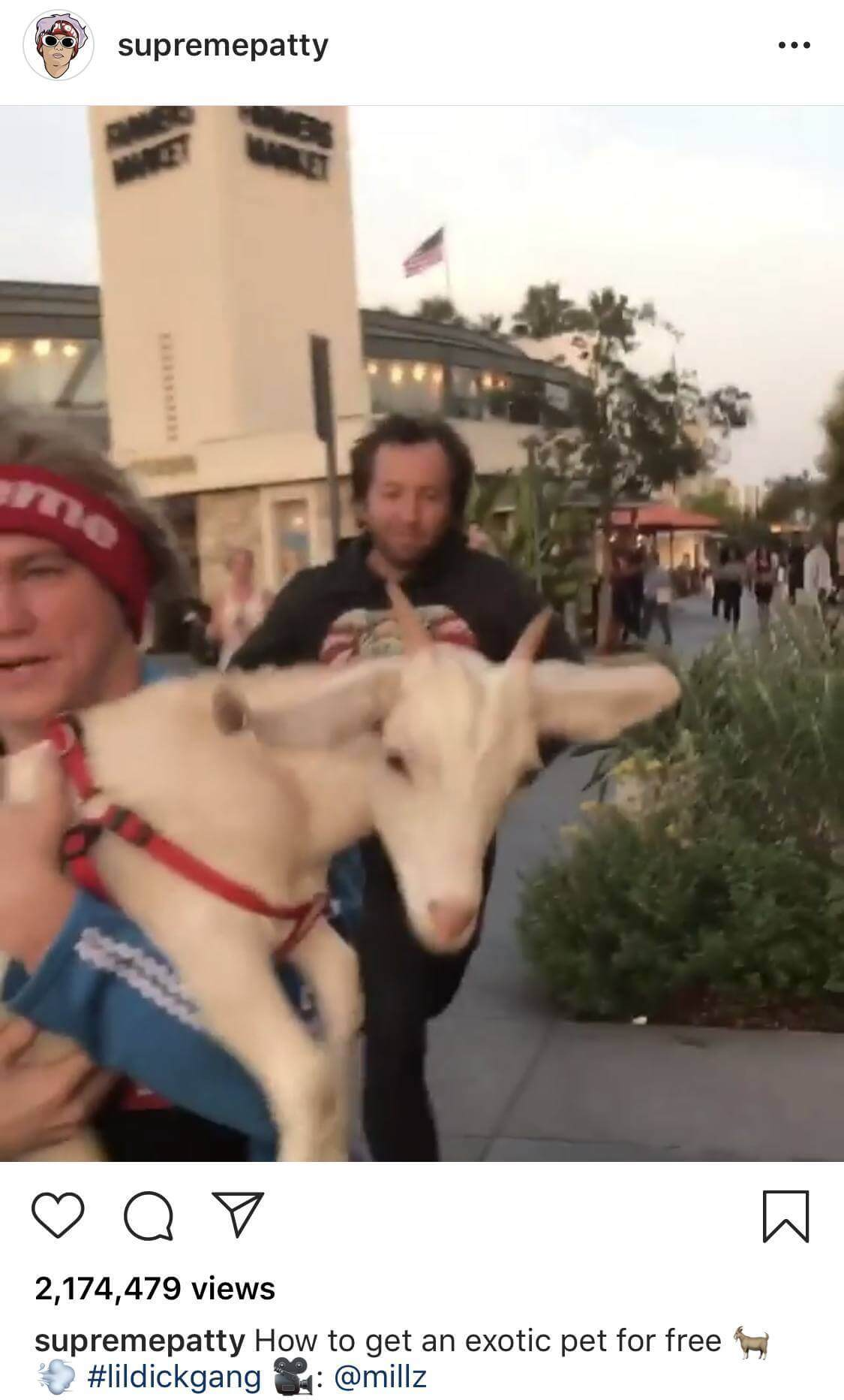 Supreme Patty Stealing Goat