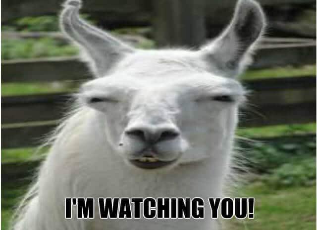 Watching You Meme