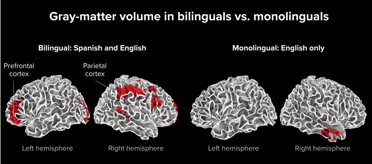 Benefits to brain with second language